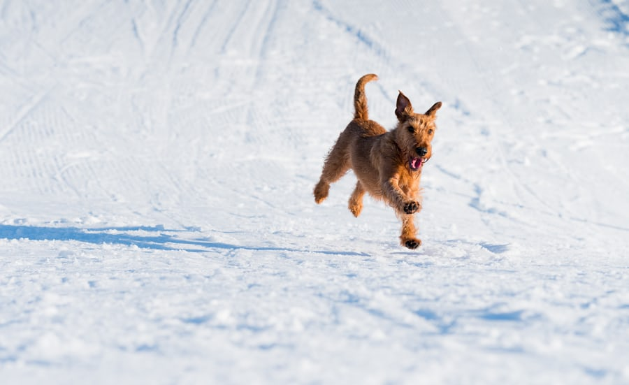 24 Ways to Get More Exercise in the Winter